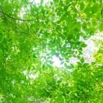 プランチュール徳永の心の浄化(#^^#)